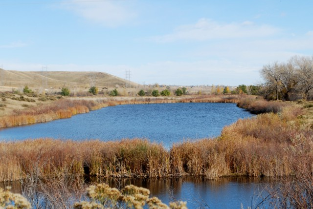 wetlands in Chatfield State Park