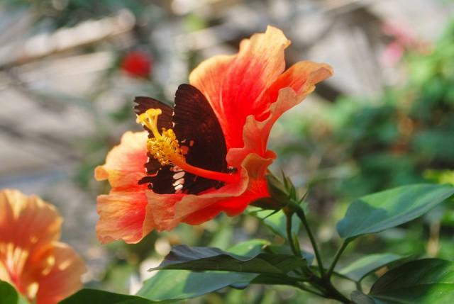 Butterfly pavillion