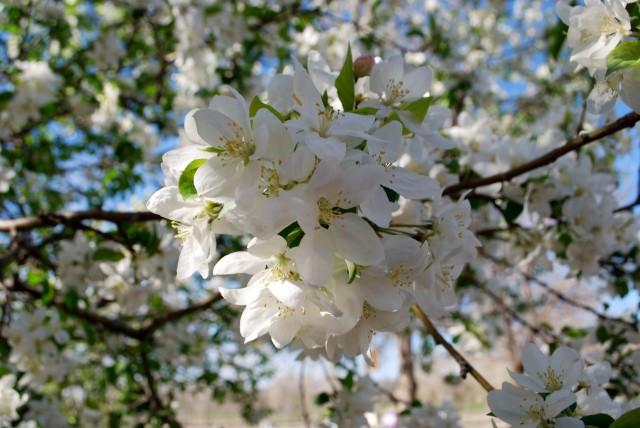hudson gardens white