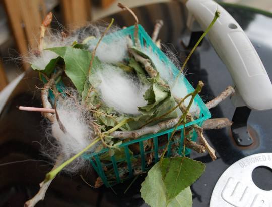 D's nest includes tiny twigs, leaves and cat's hair