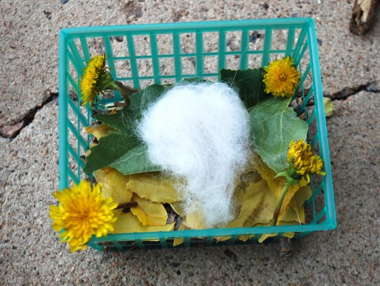 C.'s also has leaves and cat's hair, plus she went for esthetics with dandelions :)