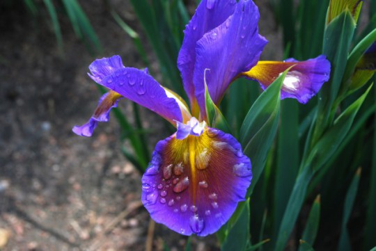 this iris took my breath away with its beauty