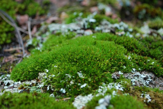 and glorious moss!