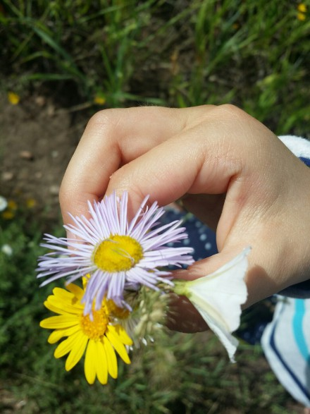 making little bouquets on a hiking trip