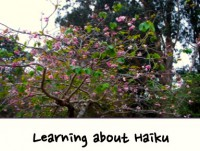learning about haiku