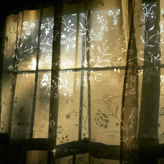 Oh these late summer golden hours, with lacy shadows on my walls and book pages...